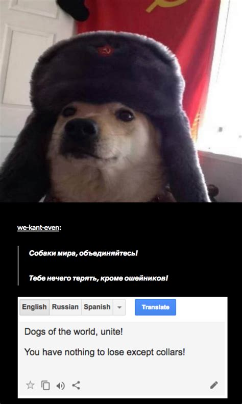 White Russian Meme - russia dog russian cat translations know your meme