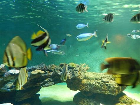 aquarium le aquarium foto aquarium le 7eme continent talmont