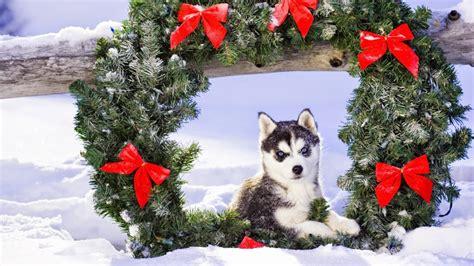 imagenes graciosas de animales en navidad preciosos wallpapers de animales navide 241 os todo mascotas
