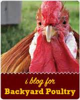 Backyard Chickens Celery Chicken Podcast Where All Things Chicken Are