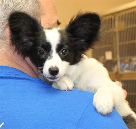 shore animal league puppy 80 dogs rescued from puppy mills in ok in need of homes