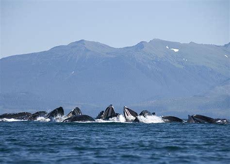 12 best honeymoon 17 images on alaska trip alaskan cruise and get a