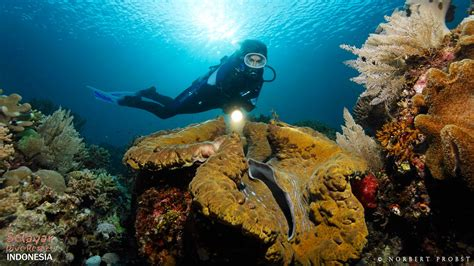 selayar dive resort your perfect diving holiday in