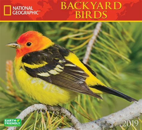 kinds of birds in your backyard birds in your backyard 28 images birds in your