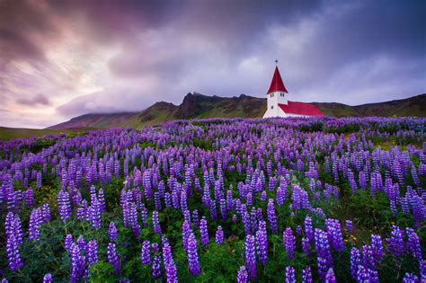 Amazing Charlottesville Church #2: Iceland-vik-church-sunset-lupine-mountain.jpg?w=950