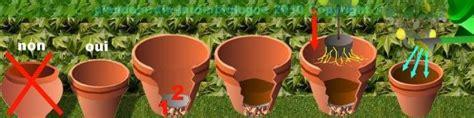 agrumes culture en bac ou pot entretien des agrumes en