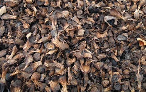Jual Batok Kelapa Sawit palm kernel shell in cheras kuala lumpur global green