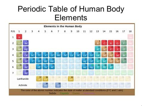 periodic table of human body elements authorstream