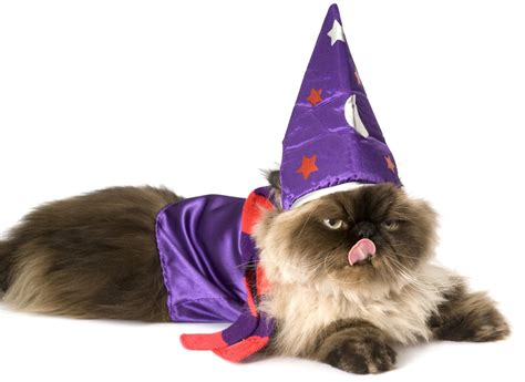 wizard cat 13 costume ideas for your cat s personality