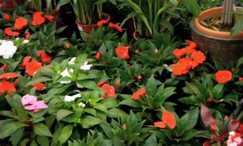 giardini di fiori i fiori per un giardino all ombra coloratissimo leitv