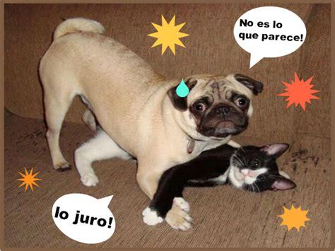 imagenes graciosas de cumpleaños con perros viernes 31 de octubre de 2014