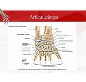 Huesos Del Carpo