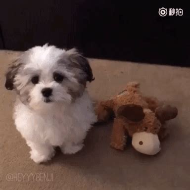 heyyybenji gifs find & share on giphy