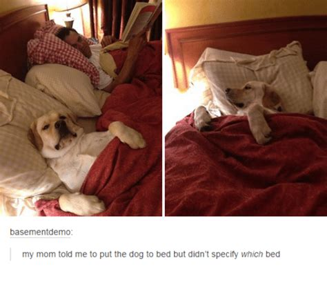 dog in bed meme basementdemo my mom told me to put the dog to bed but didn