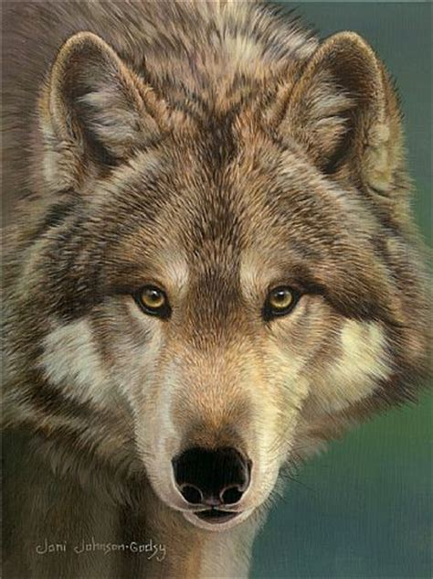 wolf gray paint grey wolf painting www pixshark com images galleries
