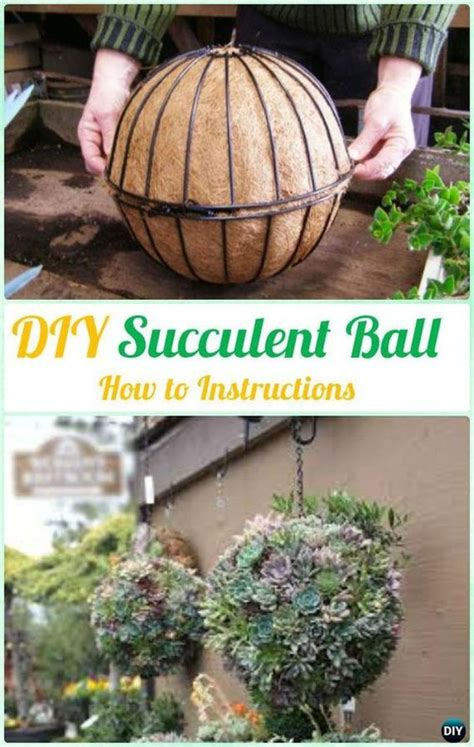 succulent container garden ideas images