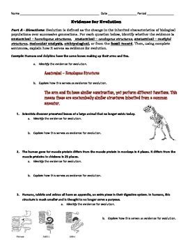Fossil Evidence Of Evolution Worksheet