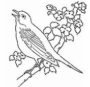 Canary Bird Singing On Tree Coloring Pages  Best Place To