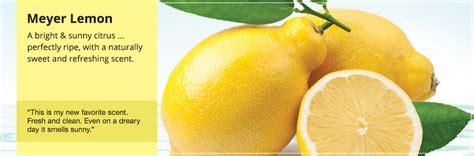 meyer lemon meyer lemon candles yankee candle
