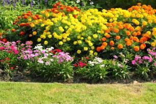 plante fleurie d ext 233 rieur liste ooreka