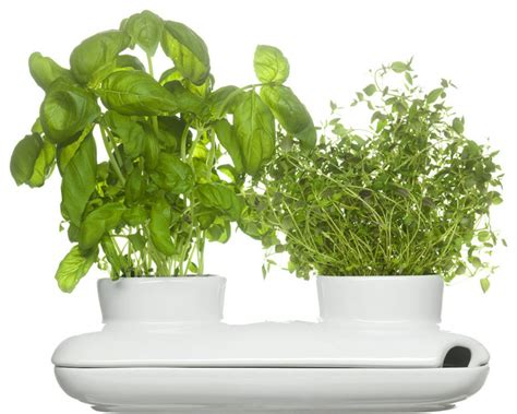 indoor modern planters duo herb pot modern indoor pots and planters by