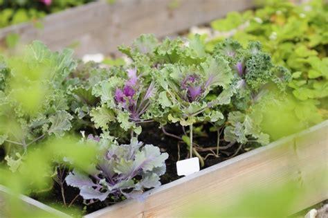 Garten Pflanzen Gute Nachbarn by Mischkultur Im Garten Gute Und Schlechte Beetpartner