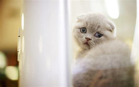 kitty kat themes cat desktop theme hd desktop wallpapers 4k hd