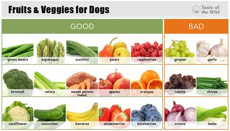 are oranges bad for dogs healthy snack choices to tip the scales in your pet s favor taste of the pet food