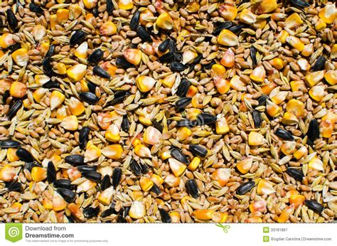 organic black sunflower seeds for chickens mixed ceareals and seeds chicken food royalty free stock photography image 33181887