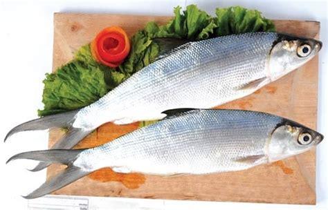 22 manfaat ikan bandeng bagi kesehatan manfaat co id