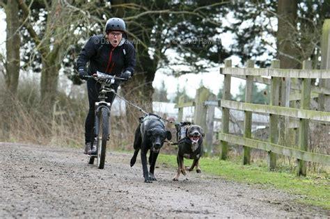 Pace Setter Dog Training | 13 best bikejoring images on pinterest bicycles dog