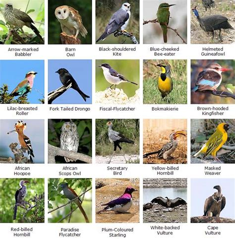 names of different types of individual by african world travel birds ornithology