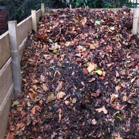 mold in compost collecting autumn leaves