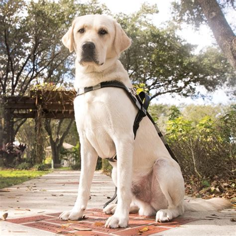 Activities For Blind Dogs Southeastern Guide Dogs