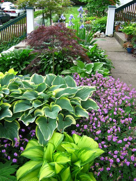 front yard garden plants hosta gardens on hosta plants shade garden