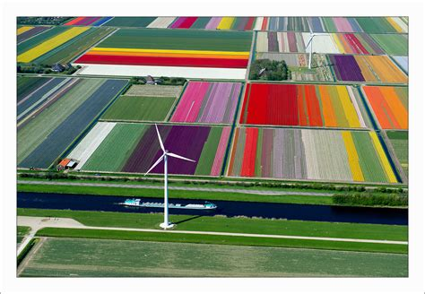 netherlands tulip fields holland flower fields and tulips galore irishmanabroad com