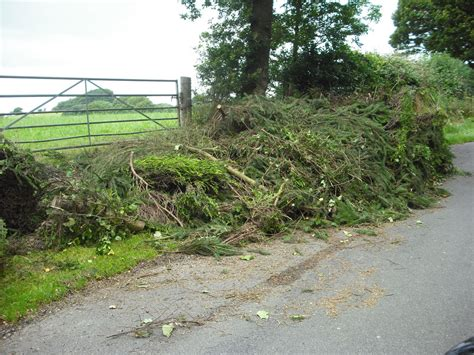 section 33 environmental protection act 1990 fly tipping tree surgeons wimbledon clapham wandsworth