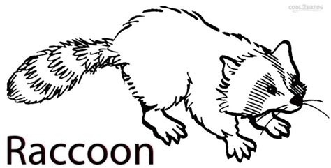 printable raccoon images get this printable raccoon coloring pages 42472