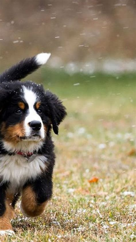 cute dog wallpapers for android desktop wallpaper box download android wallpaper cute puppies pictures full size