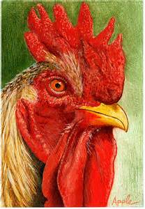 Galaxy Wall Murals quot the red rooster farm animal painting quot by lindaappleart