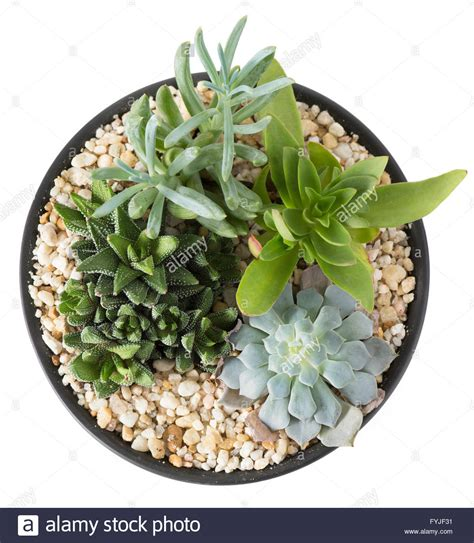 Overhead view of an indoor plant garden with succulent plants in a stock photo royalty free