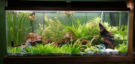 how to aquascape a freshwater aquarium 1000 images about freshwater aquariums on pinterest