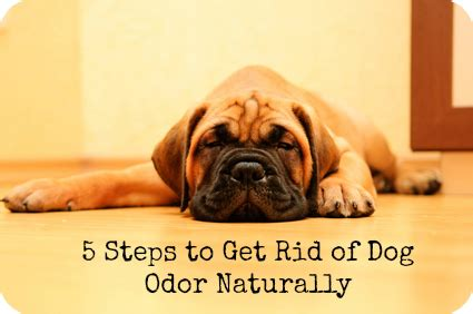 how to get rid of dog smell in house how to get smoke smell out of wood male models picture