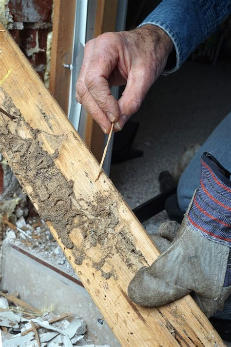 How to Tell if Your Hardwood Floors Have Termite Damage