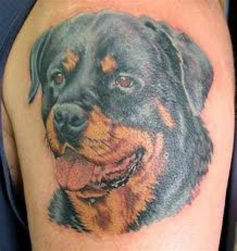 rottweiler tattoo designs rottweiler tattoos and meanings rottweiler designs