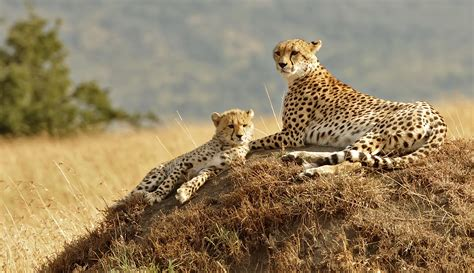 Syari Kanita familienreise kenia safari mit kindern nach kenia