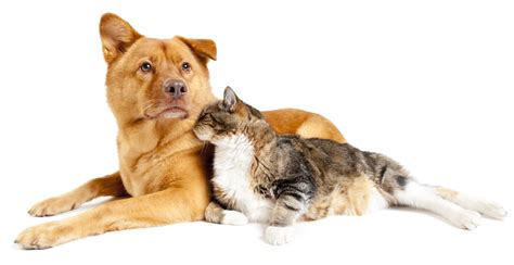 dogs and cats which owns the best cat or sell your