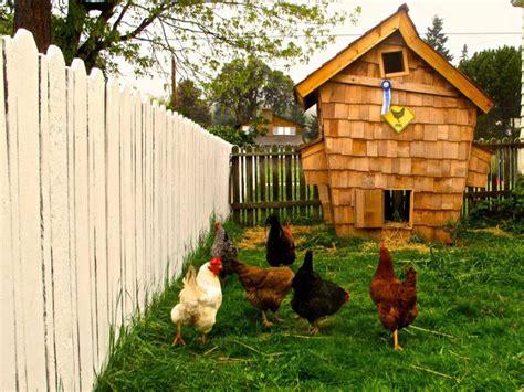 inspiring urban chicken coop designs home design