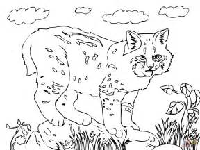bobcat coloring page baby bob cat free colouring pages