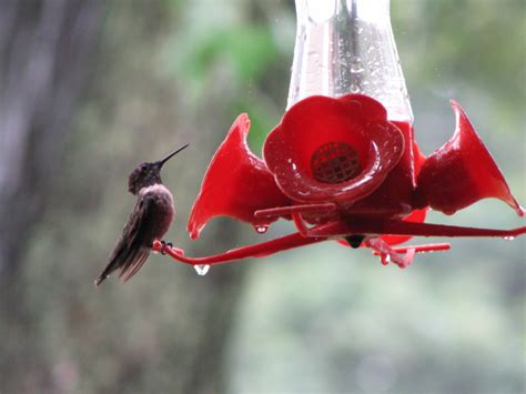 where to hang hummingbird feeders garden guides